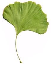 logo firmy Biokosmetika - RNDr. Vlasta Jozífková