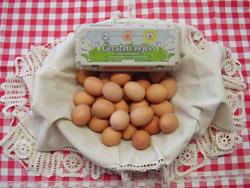 http://www.cesko-katalog.cz/galerie/zemedelskeho-druzstva-agroholding-se-sidlem-v-bernarticich1579855922.jpg